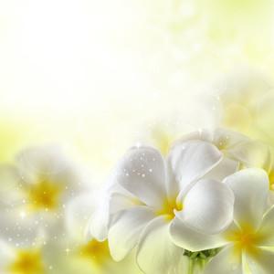 Plumeria 꽃의 꽃다발